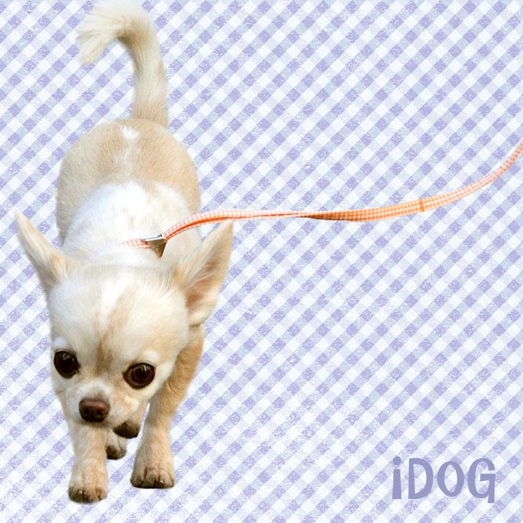 【犬 首輪】 iDog アイドッグ ワンタッチリード ギンガムチェック 【国産 布製】:犬の服のiDog