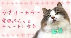 iCat-モチーフ付首輪 10mm幅 | 犬服・猫用品の卸売り専用サイト|idogicat.net