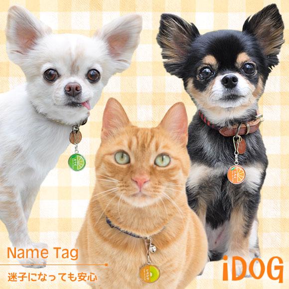 【迷子札 名札】 iDog&iCat ネームタグ【迷子札】ハーフフルーツ 【ネームプレート ドッグタグ】:犬の服のiDog