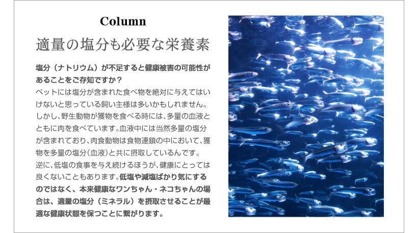 「Column」適量の塩分も必要な栄養素