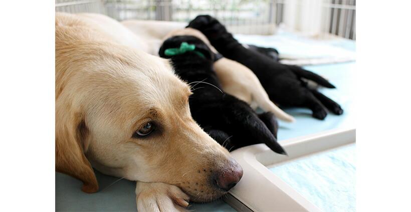 ミルクを飲む仔犬と母犬の写真