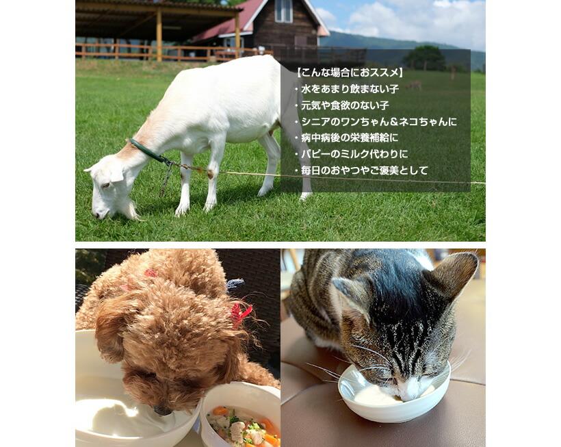 このような場合にオススメの例。ミルクを飲むワンちゃんとなこちゃんの写真。