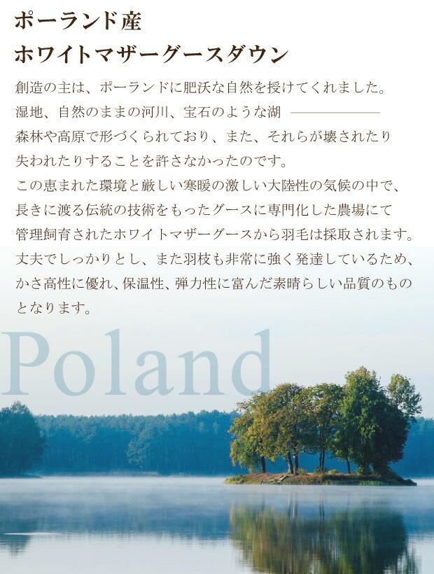 ポーランドタグ