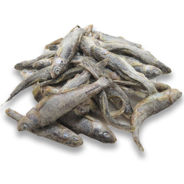 [アドドッグ]ミネソタの湖の小魚たち