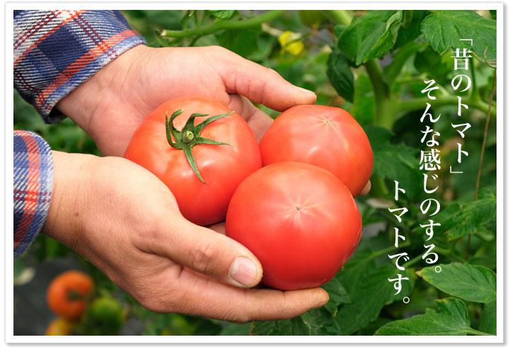 「昔のトマト」そんな感じのするトマトです。 【楽天市場】高上青果 こだわりの味トマト(家庭用)う