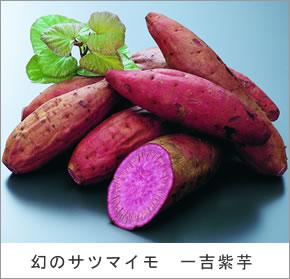 这红薯是幻像可以只在鹿儿岛的满足是什么糖甜薯的   倍之多.
