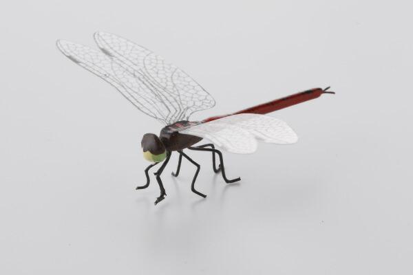昆虫模型 あかとんぼ