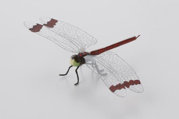 楽天市場】昆虫模型 みやまあか...
