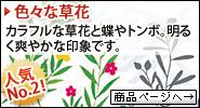 色々な草花