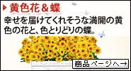 黄色花&蝶