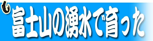 ます寿司 ボリューム