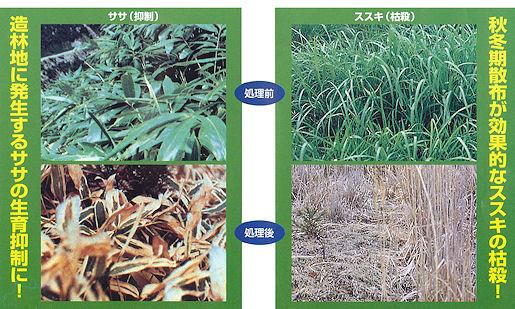 ササ、ススキやチガヤのイネ科雑草に効果を発揮!フレノック粒剤10
