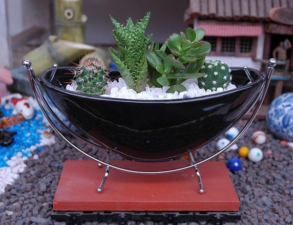 Kajoen rakuten global market slender black cactus - Cactus de interior ...