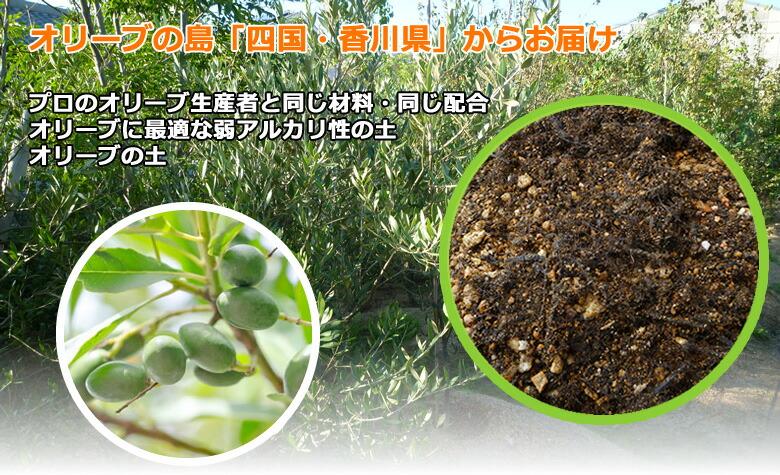 プロのオリーブ生産者と同じ材料・同じ配合。オリーブに最適な弱アルカリ性の土。