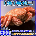 600 g fresh horsehair crab and crab / crabs / hair