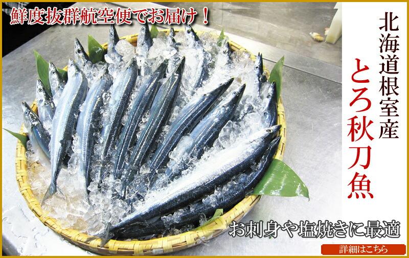 根室とろ秋刀魚