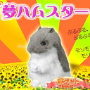 """♪"" is totally like a genuine article restlessly""! Dream hamster (ロボロフスキー )[ dream pet Sega]) of the palm size"
