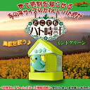 """I'm angry feeling! ""Alarm clock tells time in a voice ♪ cute cuckoo clock for Palm-sized 'anywhere but cuckoo clock Mint green'"