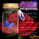 Too great laughs! Beyond the real butterflies beautiful dynamic ★ ultra Butterfly (butterfly)-blue morpho ocean4-Wonder Butterfly