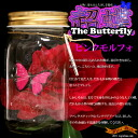 Too great laughs! Beyond the real butterflies beautiful dynamic ★ ultra Butterfly (butterfly)-ピンクモルフォ ocean4-Wonder Butterfly