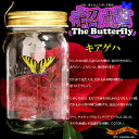 Too great laughs! Beyond the real butterflies beautiful dynamic ★ ultra Butterfly (butterfly)-swallowtail ocean4-Wonder Butterfly