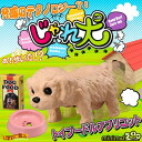 [Book: end of March] NEW minimal Zoo play dog (toy poodle and apricot)