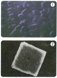 キパワーソルトの結晶体