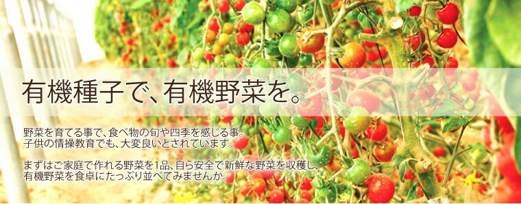 有機種子で有機野菜を