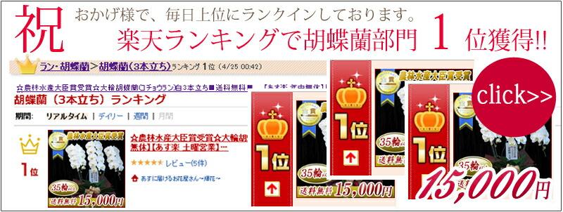 楽天ランキング1位 大輪胡蝶蘭3本立ち15,000円