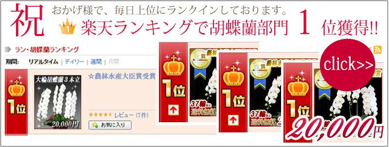 楽天ランキング1位 大輪胡蝶蘭3本立ち20,000円