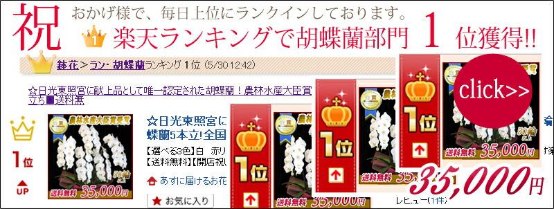 楽天ランキング1位 大輪胡蝶蘭5本立ち35,000円
