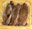 3 Tail ( gejang 3 tail, soy sauce 300 g ) [over moth II over crab]