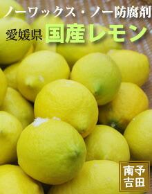 吉田産レモン