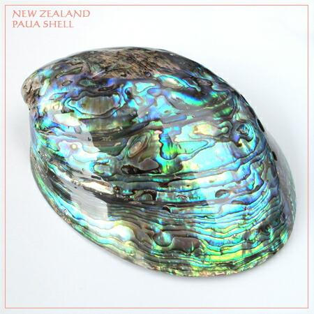 ニュージーランドパウア