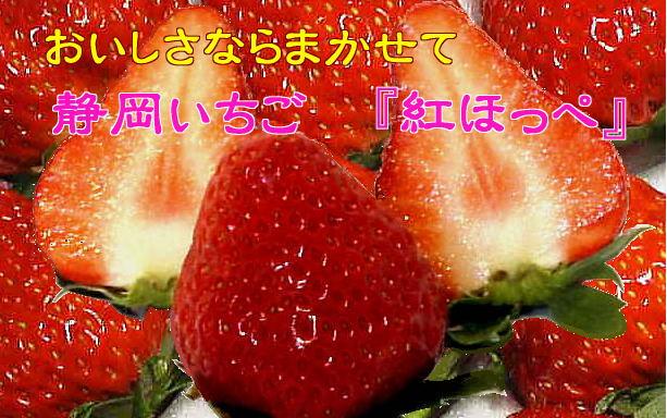 静岡いちご 『紅ほっぺ』