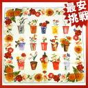 GUCCI flower print stall scarf silk Lady's