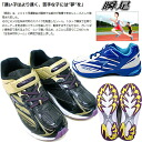 Even the competition of the シュンソク eyewink foot athletic meet shows power! 947 [JJ-] SJJ9470 boys Jr. sneakers junior sneaker [19.0-23.0cm]●