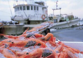 甘えびと漁船