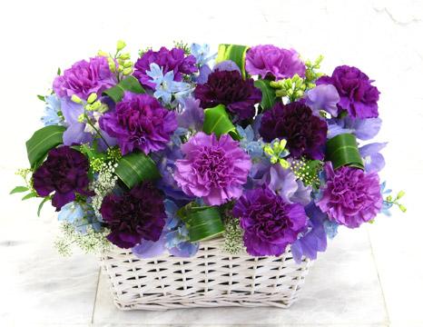 紫色康乃馨水粉画-亲节