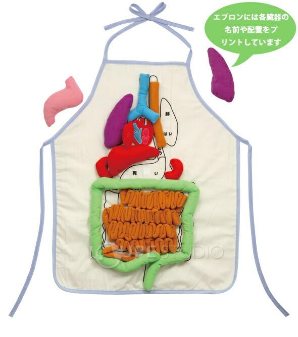 儿童食道结构图