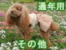 通年用スカート(オーガニックコットン犬服)