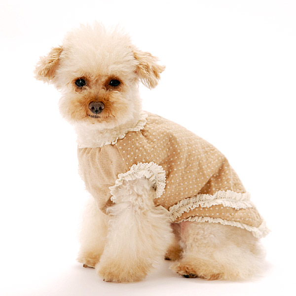 オーガニックコットン犬服