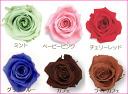 One premium Rose