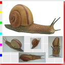 ★The mega series, snail party goods joke, mischief, astonishment, imitation, huge snail