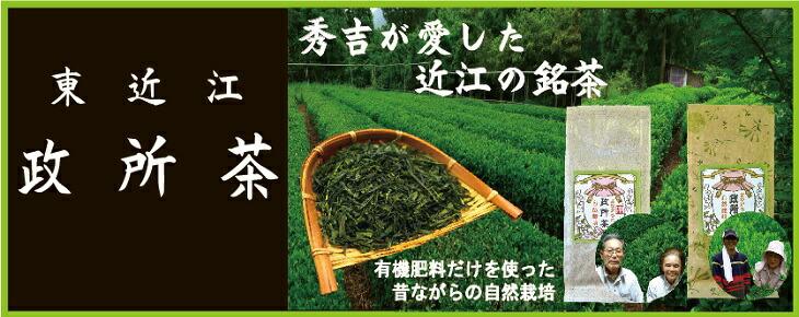 希少な在来種の茶 近江政所茶