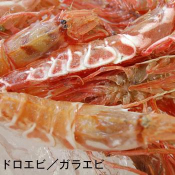 朝とれドロエビ(生)1kg