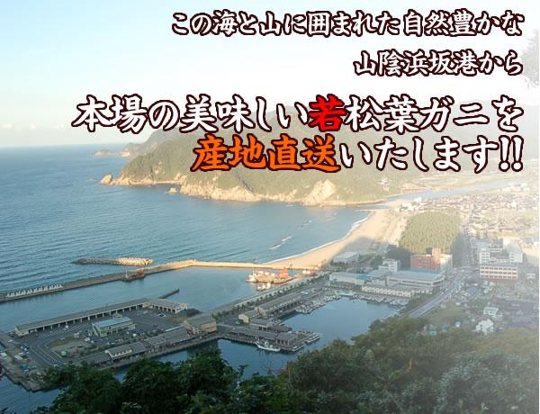 浜坂港は松葉蟹の水揚げ量が日本一 で、毎朝、たくさん の蟹が並びます。その中から、この道一筋30年の当店社長が さらに厳選し、せり落としみなさまにお届け致しております。