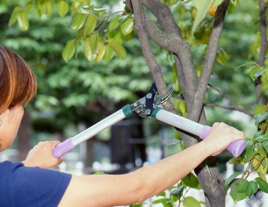 Athene rakuten global market large branches cut for Big scissors for gardening