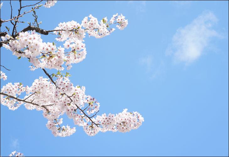 春の沖縄民藝祭