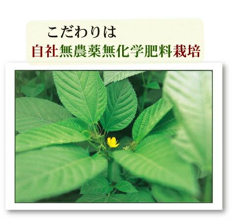 こだわりは自社無農薬無化学肥料栽培